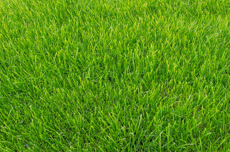 how to make your grass this green
